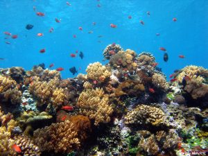 Coral-Reef-Nusa-Penida-4-by-Marthen-Welly-2009-3-1